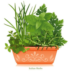 Italian Herb Garden Oregano Chives Sweet Basil Parsley Rosemary