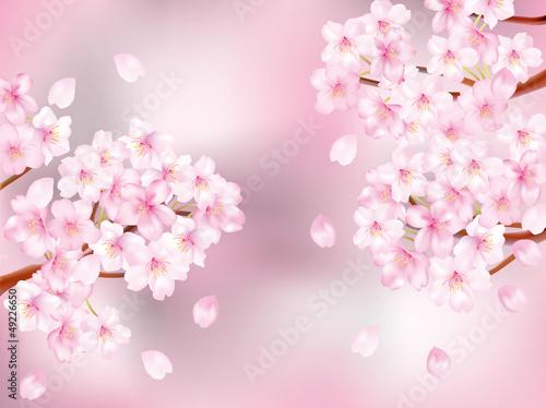 桜枝_ピンク