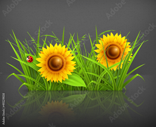 Sunflowers in grass