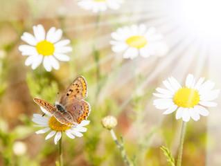 Schmetterling im Sonnenlicht