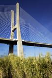 Vasco da Gama bridge and grenn grass