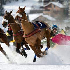 White Turf race - St. Moritz - (CH)