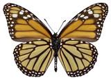 Orange monarch (Danaus plexippus) butterfly seen from belove poster
