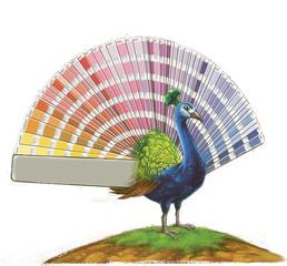 pavo real colorido