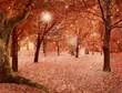 Magic autumnal forest