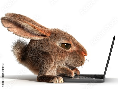 Rabbit using a laptop