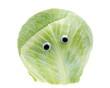 Weißkraut mit Augen