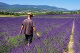 Fototapety Lavendelfeld mit jungen Mann - lavender field and young man 01