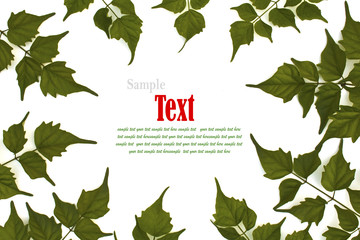 Green leaf background with copy-space.