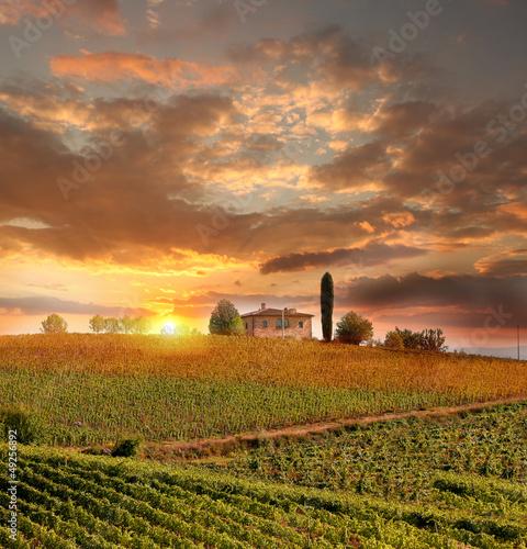 Fototapeten,italien,landschaft,wein,wein