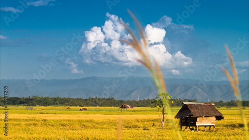 Rice farm in Thailand : Time lapse