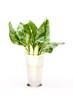 Vase With Chard Leaves