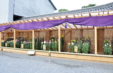 Flower Garden at Nijo Castle in Kyoto