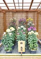 Flower Garden at Nijo Castle