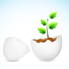 Sapling growing in Egg Shell