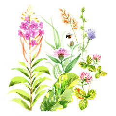 Watercolor summer grasses