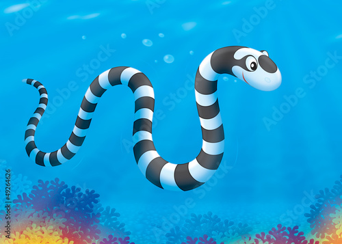 Sea snake swimming over a coral reef
