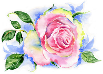 Watercolor rose flower