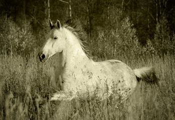 horse in forest