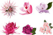 six pink color isolated flowers