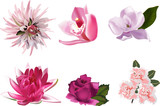 Fototapety six pink color isolated flowers