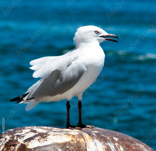 Seagull at the harbour