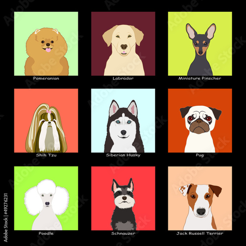 The Dog Collection 03