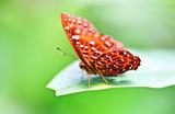 Fototapete Schön - Bramkofel - Insekten