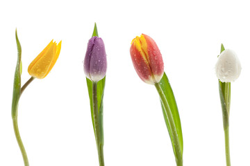 Bunte Tulpenreihe