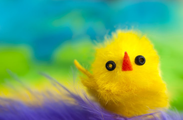 Yellow chicken toy colorful background