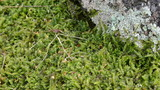 newt triton eft amphibian crawl moss poster