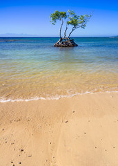 Tree in the Ocean