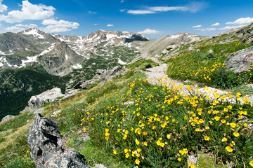 Hiking Trail Through Flowers of Colorado Mountains