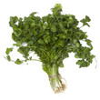 Cilantro or Coriander Isolated
