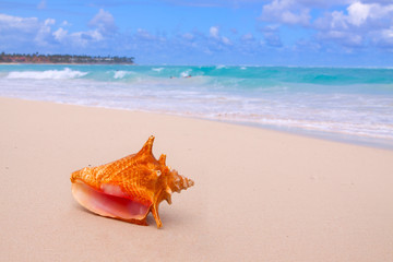 Conch Shell On Tropical Beach.