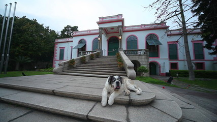 St Bernard sitting on porch of the house