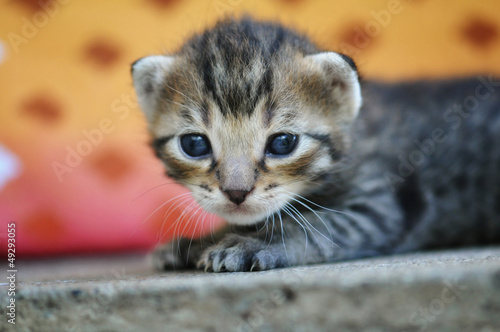 Cute kitten looking