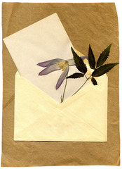 old envelope and the dried-up flower