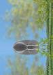 composition asiatique détente, galet et bambou
