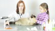 female veterinarian gives drugs to treat the cat a little girl