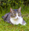 cute cat relaxing in the garden