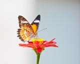Fototapeta kolor - kolorowy - Insekt