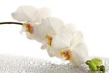 Fototapete Orchidee - Drops - Blume