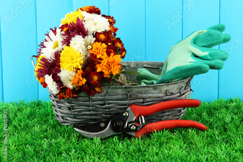 Secateurs with flowers in basket on wooden background
