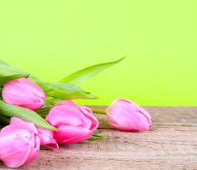 Rosa Tulpen auf Holz