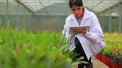 Assistant using tablet pc to check plants