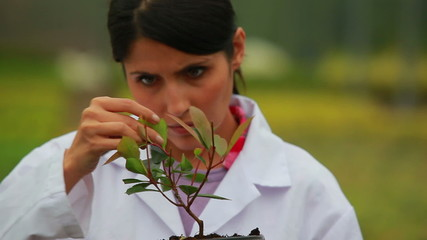 Woman inspecting plant