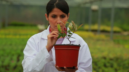 Botanist checking plant
