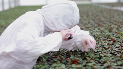 Botanist examining plants with microscope
