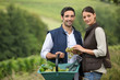 Attractive couple picking grapes